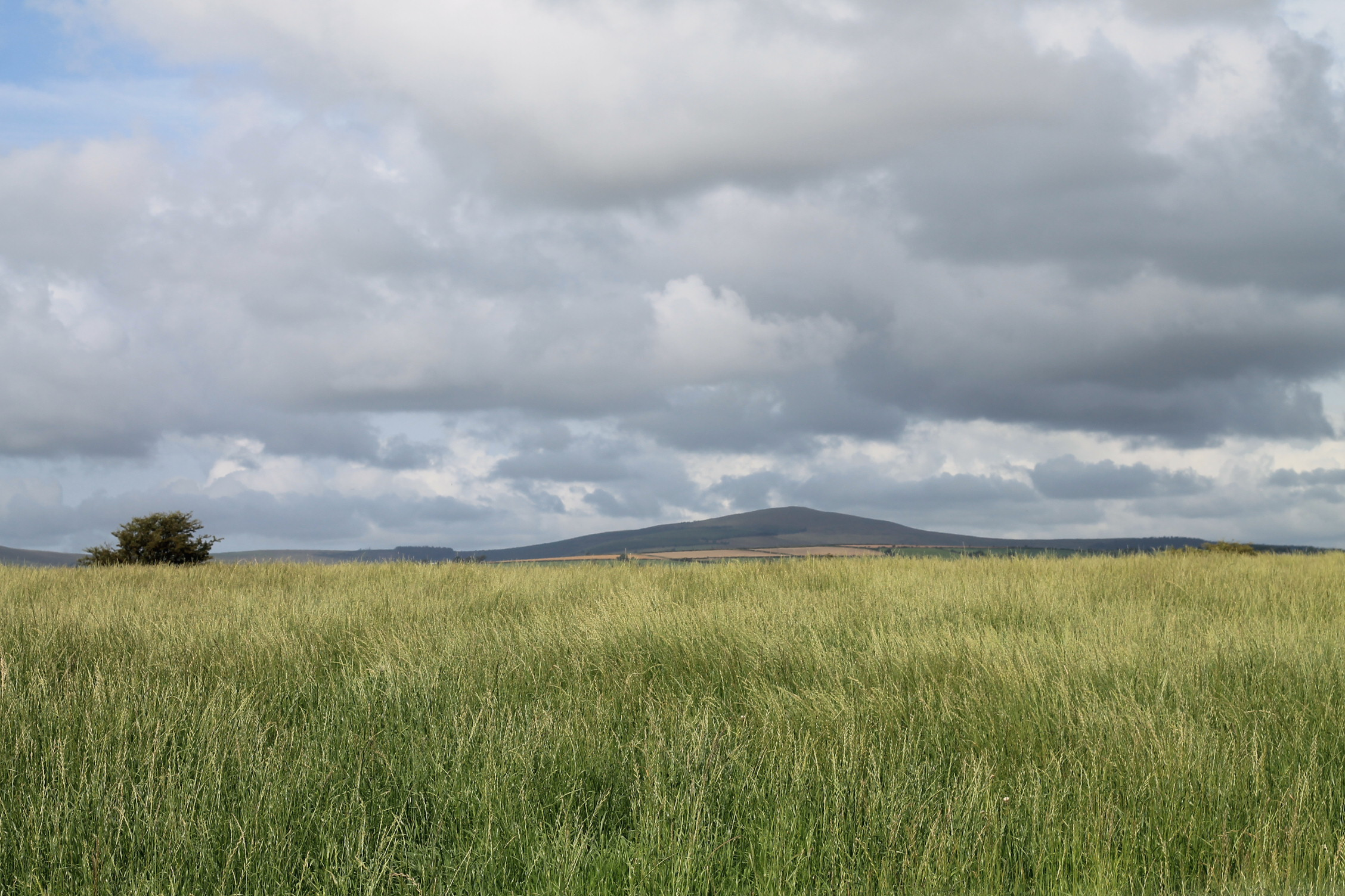 The Preseli Hills from Gelli.